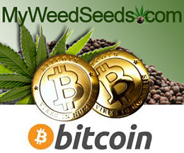 Buy Cannabis Seeds with Bitcoins MyWeedSeeds.com