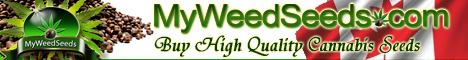 Quality Cannabis Seeds 				</div>